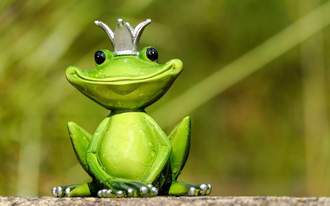 Poranek u żaby